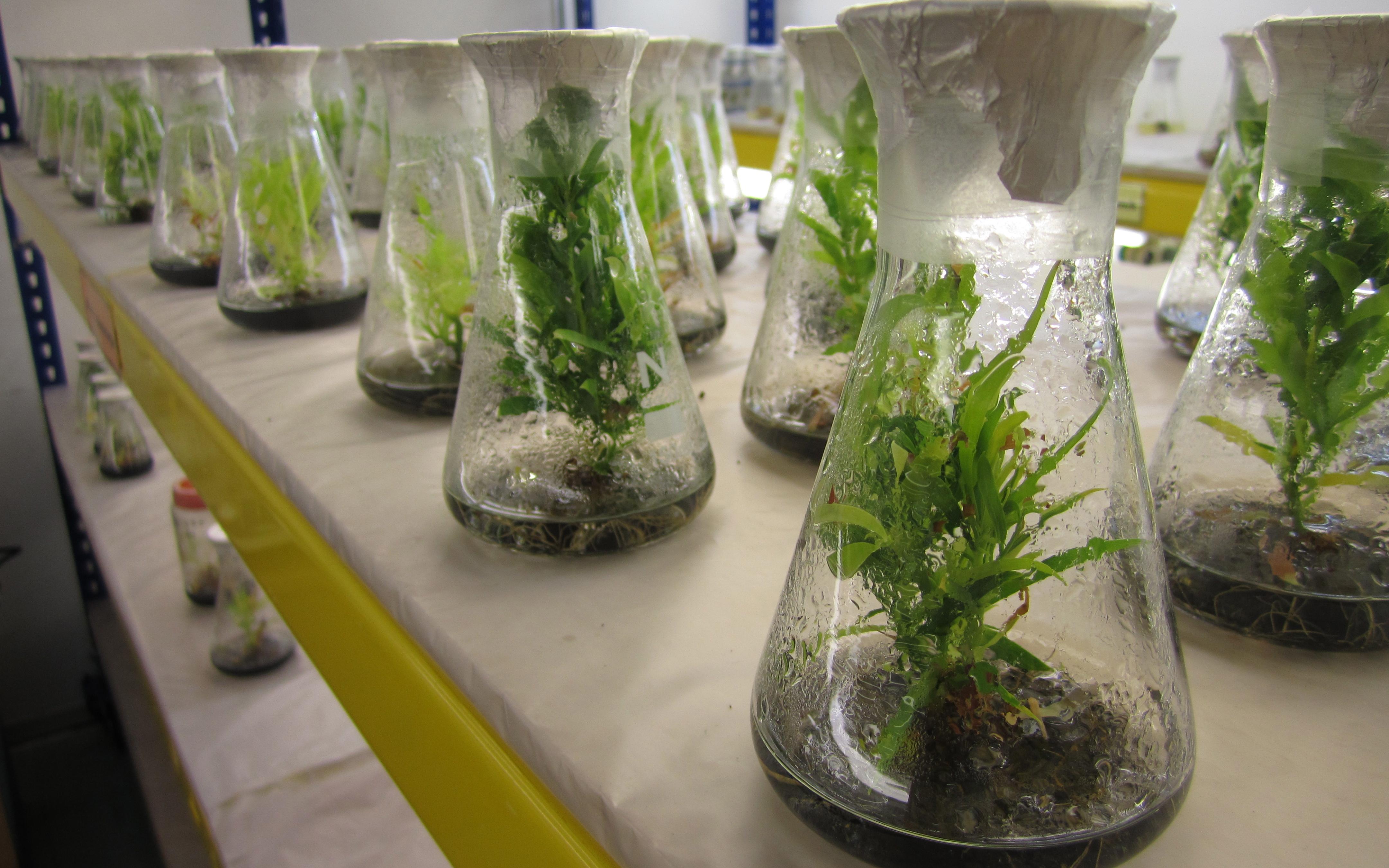 Prasangka Dan Mitos Mengenai Studi Pertanian